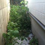 家の周りに雑草が生い茂っているので草むしり